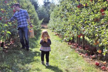 Apple picking at Bellewood Acres near Bellingham